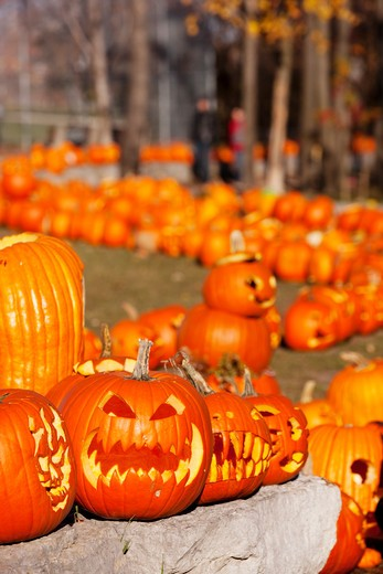 Halloween pumpkins in field : Stock Photo