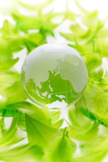 A clear globe and green feathers. : Stock Photo