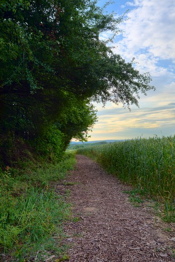 View of a footpath in the evening sun, summer, by Beckingen, Saarland/Germany, HDR image : Stock Photo