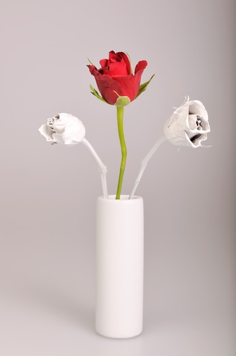 single red rose with white flowers : Stock Photo