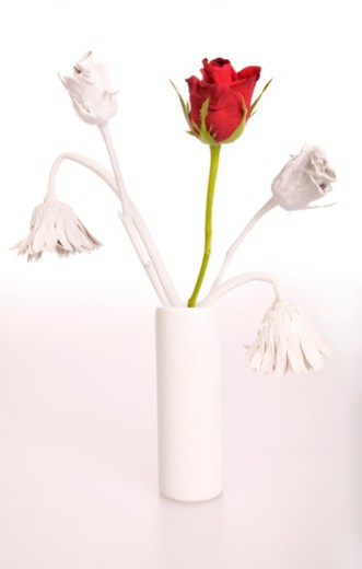 Stock Photo: 1598R-10015625 single red rose with white flowers