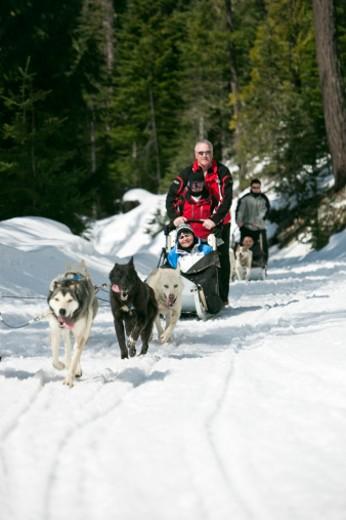 MR and PR dogsledding, British Columbia, Canada. : Stock Photo