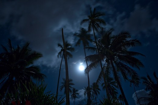 A full moon and moving clouds in a timed-exposure of a coconut grove, Wailua, Kauai, Hawaii. : Stock Photo
