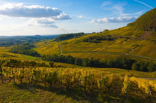 Stock Photo: 1598R-10020598 vineyards Château Chalon Jura France