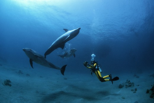 Stock Photo: 1598R-10020676 Photographer filming group of Bottlenose Dolphins (Tursiops truncatus) , Dolphin Reef, Eilat, Israel - Red Sea.