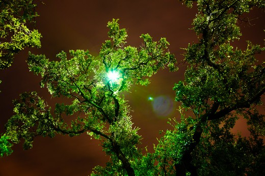 Trees at night : Stock Photo