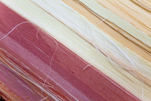 Stock Photo: 1598R-10025953 Close shoot of tropical wood