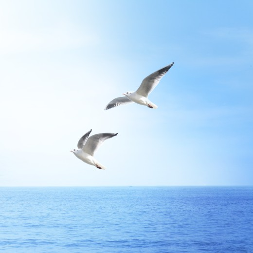 Two birds are flying over the sky.  : Stock Photo