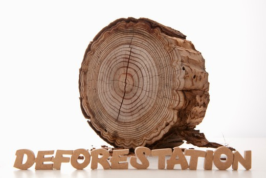 'DEFORESTATION'sign and a stump. : Stock Photo