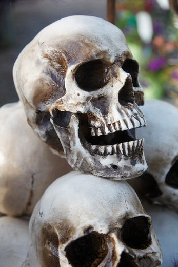Stacked skulls : Stock Photo