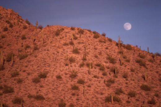 Moon over Cacti on Plains : Stock Photo