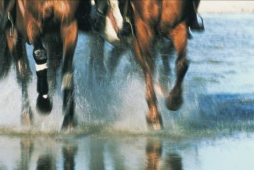 Horses galloping through sea, low section : Stock Photo
