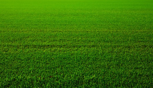Stock Photo: 1598R-10068922 The perfect sod lawn