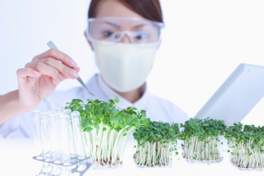 Scientists examining the vegetable seedling . : Stock Photo