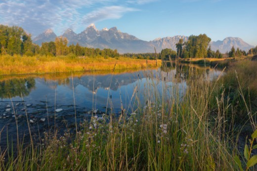 Stock Photo: 1598R-10073924 Morning light and wildflowers along the Snake River with Grand Teton Peak (elevation 13,770 feet) and the Teton Range. Grand Tetons National Park, Wyoming, USA.