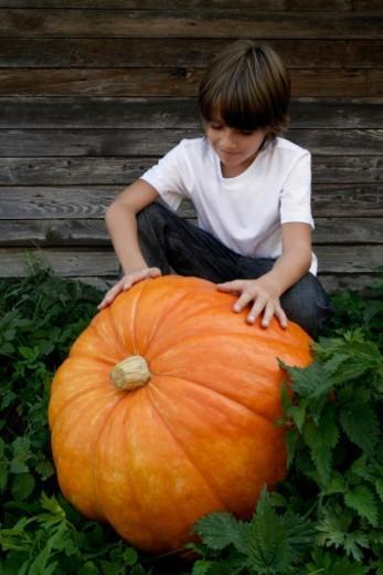 Stock Photo: 1598R-10078785 boy with huge pumpkin