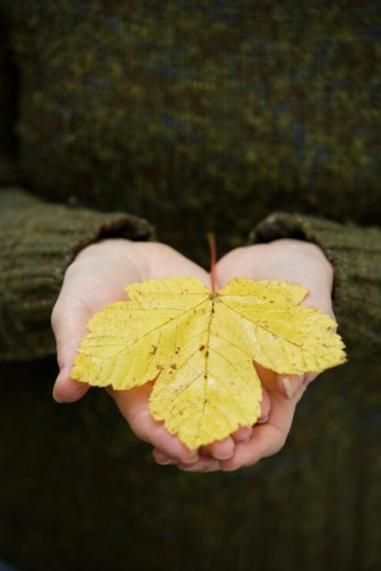 Stock Photo: 1598R-10080860 woman holding leaf in palms of hands