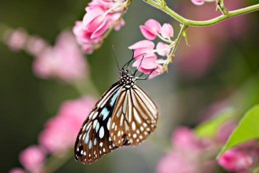 tropical butterfly on flower, close-up : Stock Photo