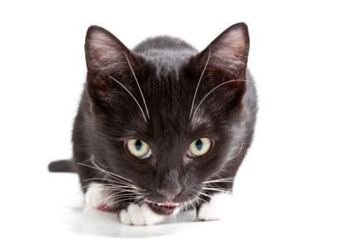 Adorable 6 week old kittens shot in the studio : Stock Photo