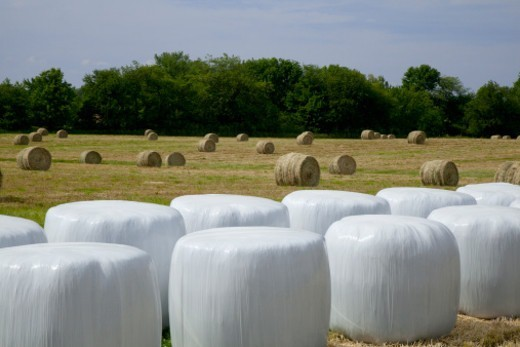 Wrapped and unwrapped hay bales in field : Stock Photo