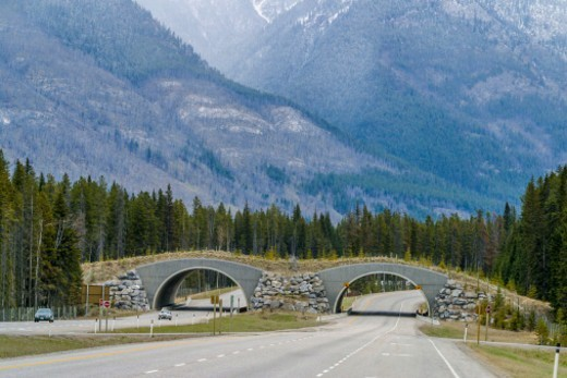 Wildlife crossing bridge, Banff, Banff National Park, Alberta, Canada. Several of these bridges cross the Trans-Canada Highway to allow wildlife a safe crossing over the highways. : Stock Photo