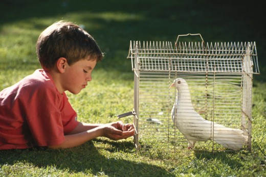 Boy (4-5) lying on grass by dove in cage, side view : Stock Photo