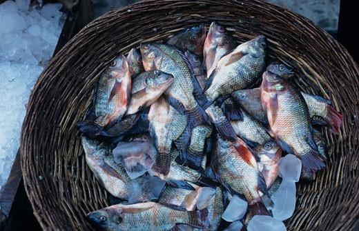 basket of fish at Marketplace, Port Said, Suez, Egypt, close-up, overhead view : Stock Photo