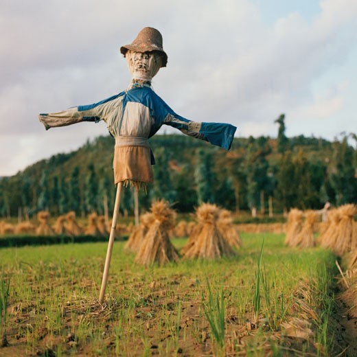 Scarecrow in a Field in Dali, China : Stock Photo