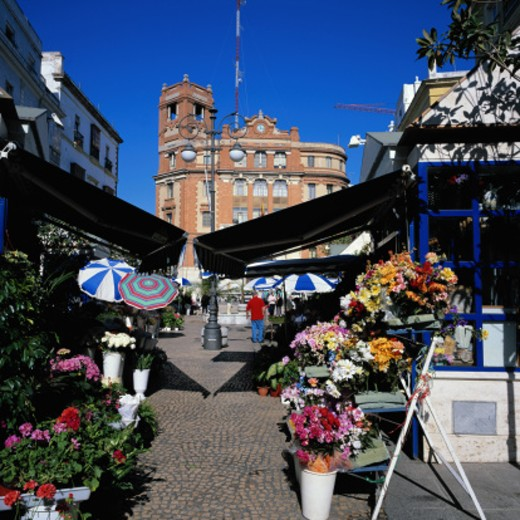 Flower Stand in Plaza de las Flores : Stock Photo