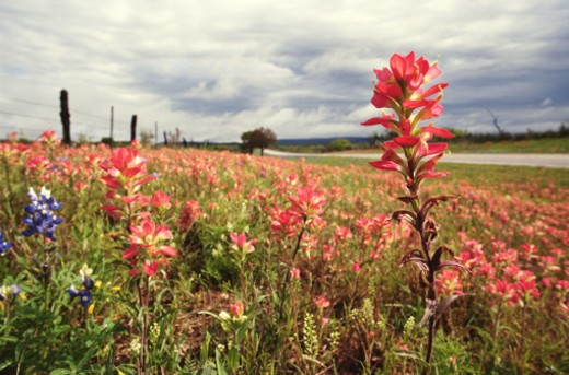 Stock Photo: 1598R-122366 Flowers on Roadside