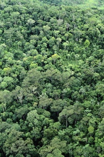 Amazon Jungle : Stock Photo