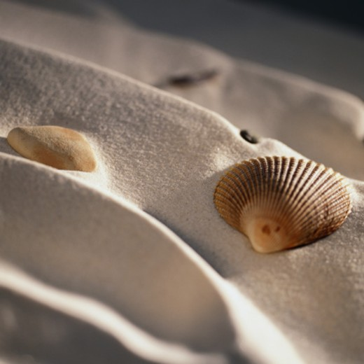 Stock Photo: 1598R-128965 Seashell on Sand