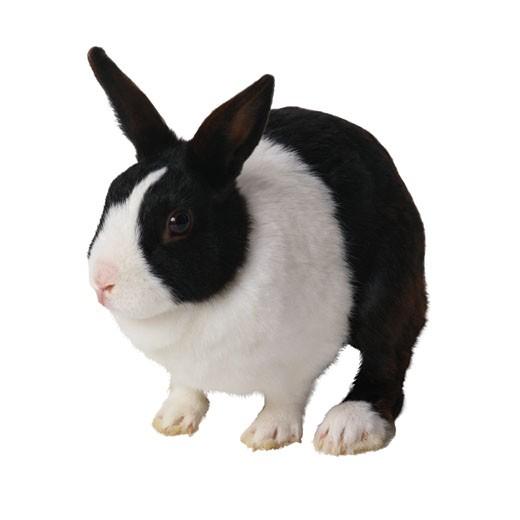 Stock Photo: 1598R-148168 Black and White Rabbit