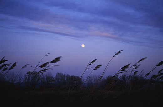 Stock Photo: 1598R-160273 Tarascon,France - Moonlit night