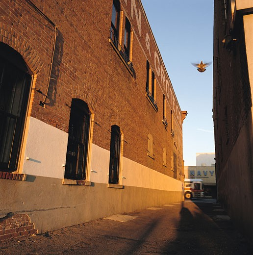 looking up from an alley between two warehouses to see a bird flying in the clear blue sky : Stock Photo