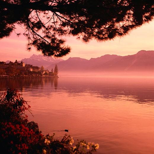 Shore of Lake Geneva in Montreux, Switzerland : Stock Photo
