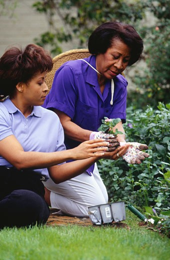 Stock Photo: 1598R-176426 Mother and daughter gardening