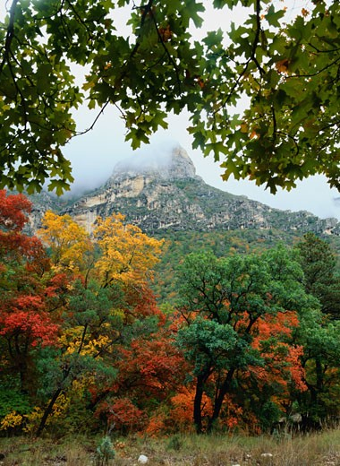 Autumn in McKittrick Canyon : Stock Photo