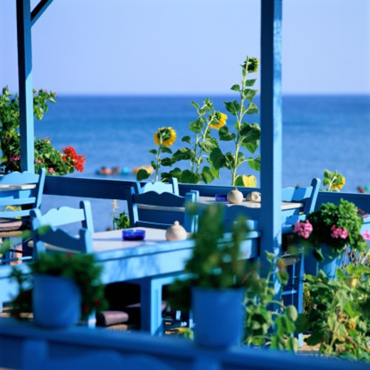 Sunflowers Growing by Tables at an Outdoor Cafe : Stock Photo