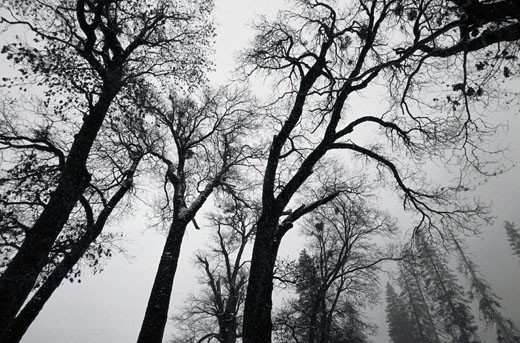 Winter Sky in Yosemite : Stock Photo