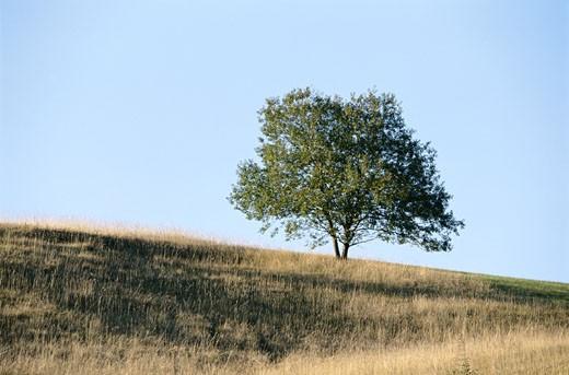 Stock Photo: 1598R-200144 Tree in Field