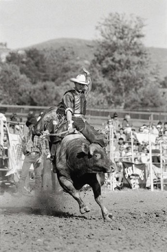 Rider hanging on to bucking bull : Stock Photo