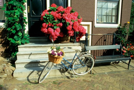 Bicycle with basket of flowers parked outside a house, Amsterdam, Netherlands : Stock Photo