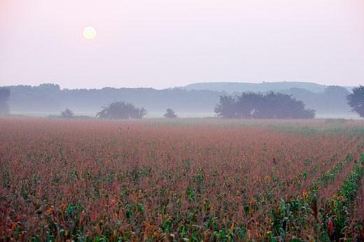 USA, Kansas, View of a corn field during sunset : Stock Photo