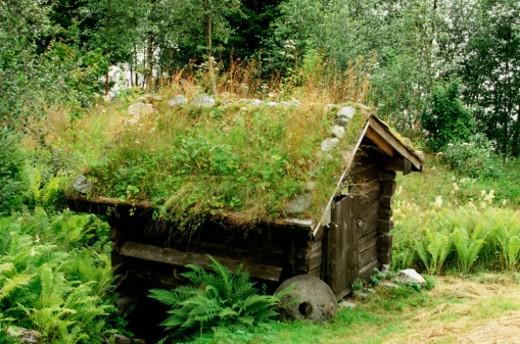 Grass and plants on the roof of a log cabin, Olden, Norway : Stock Photo