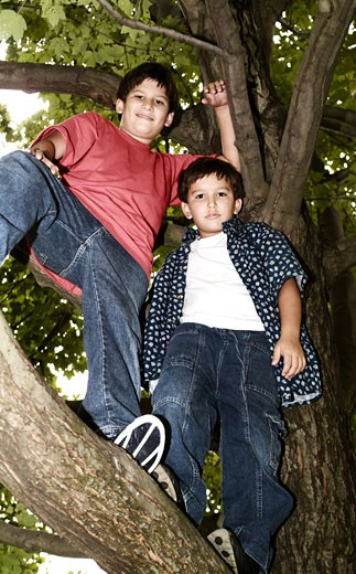 Two Hispanic boys standing on tree : Stock Photo