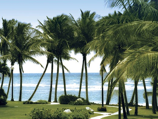 Palm trees in front of the sea : Stock Photo