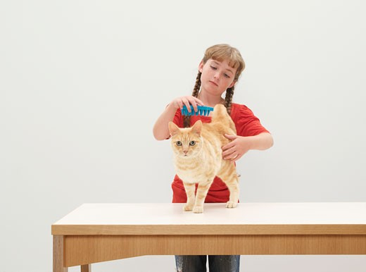 Girl (9-11) grooming cat on table : Stock Photo