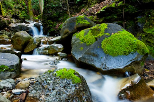 USA, California, Santa Clara County, Uvas County Park, Swanson Creek : Stock Photo