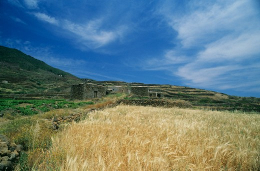 Stock Photo: 1598R-226849 Italy, Sicily, Pantelleria Island, Wheat field and ancient farm house